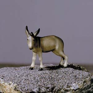 ANRI - Donkey - Vinzent nativity