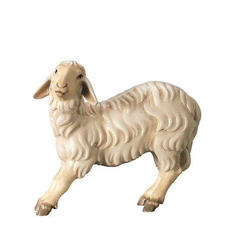Royal nativity - Sheep streching