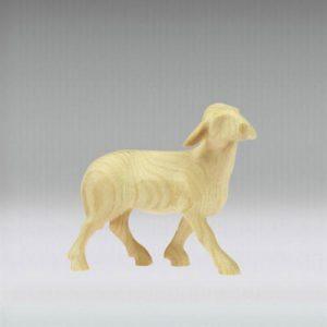 Sheep looking - Leonardo nativity