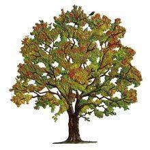 Bäume Zinnfiguren